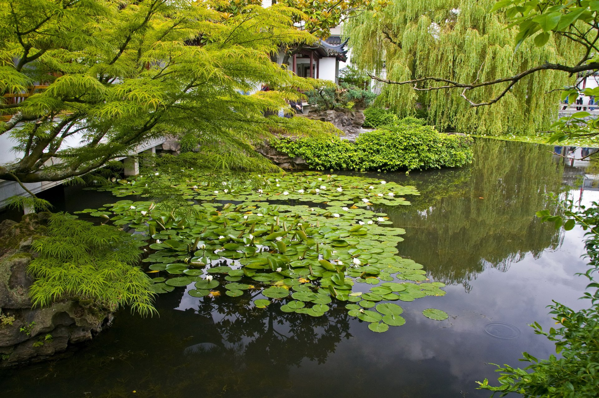 водоем в саду красивые картинки них