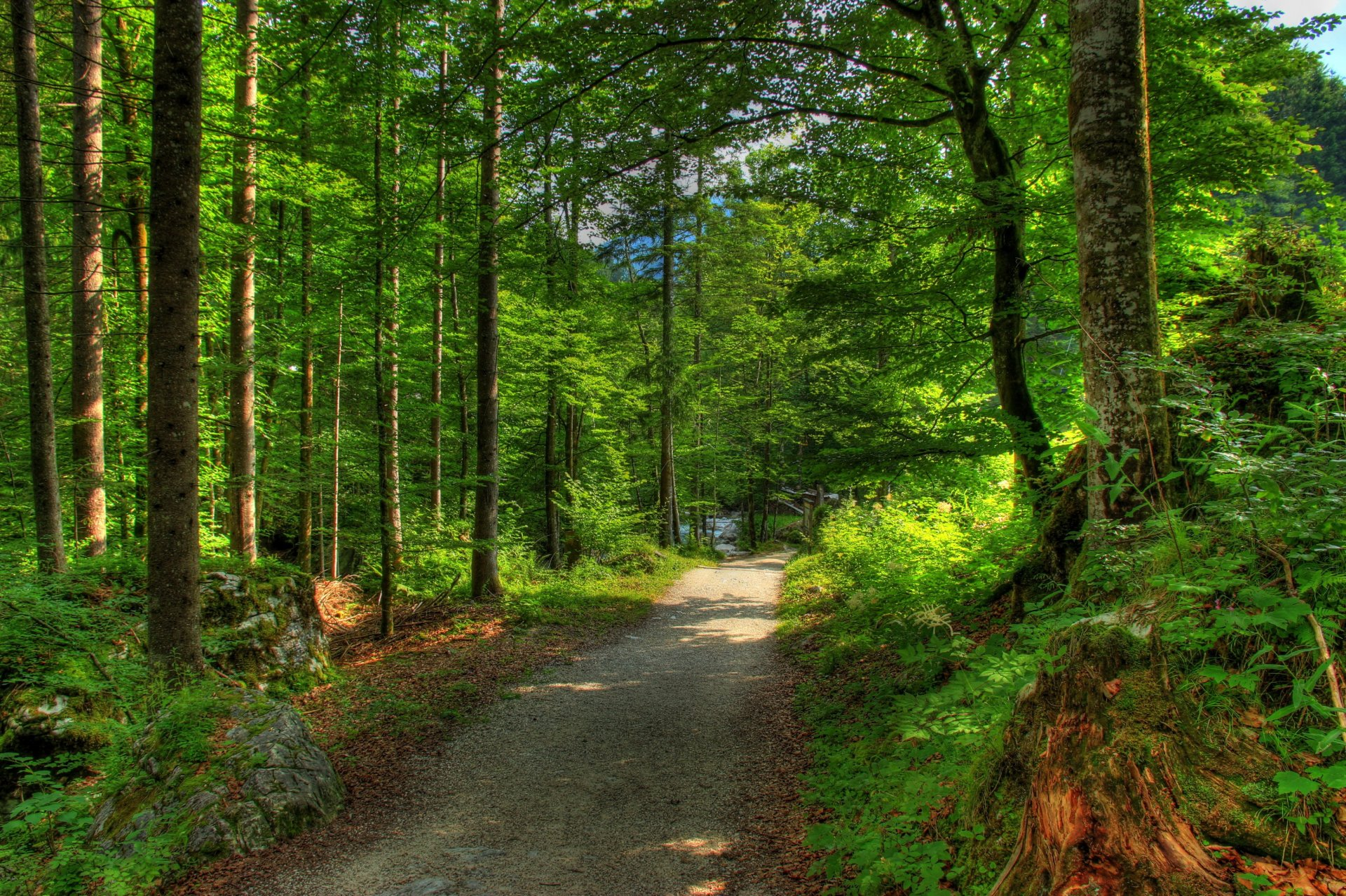Картинка леса из германии