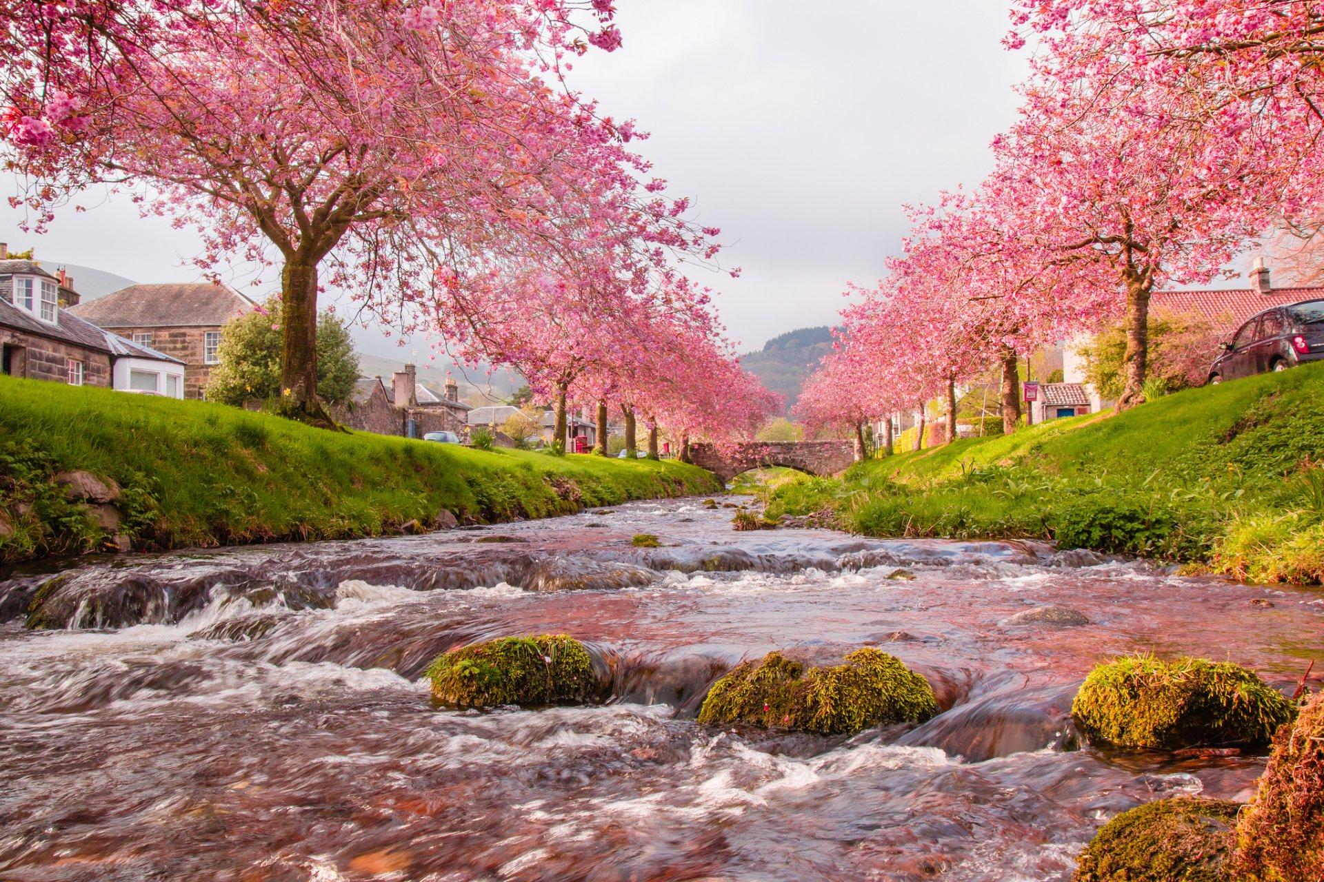 Картинки весенние пейзажи на телефон