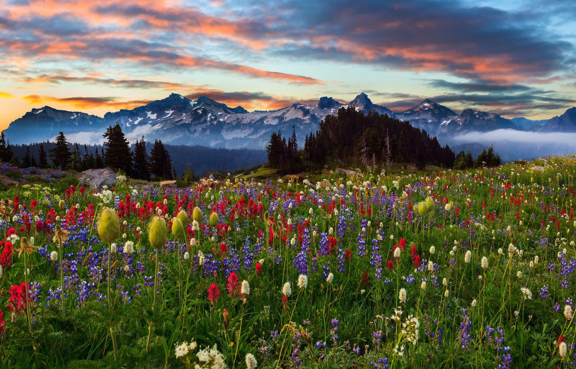 пейзаж картинки с цветами меня даче