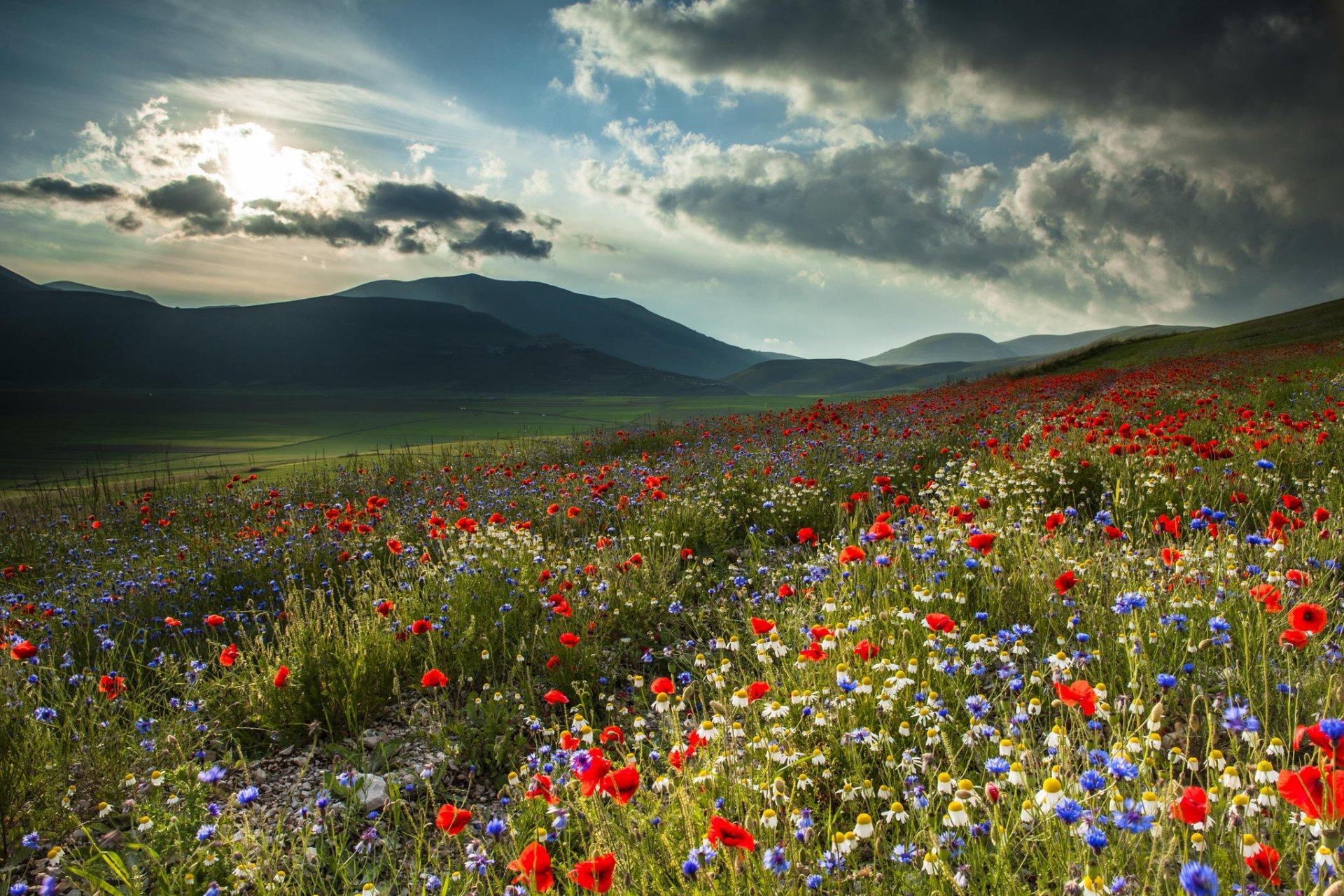 картинка поле цветов и горы подарков них расположен золотой