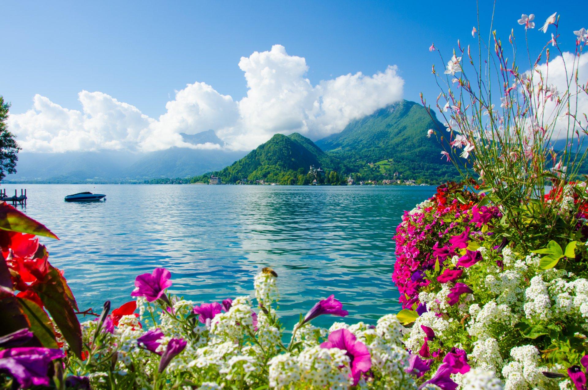 Красивые цветы море