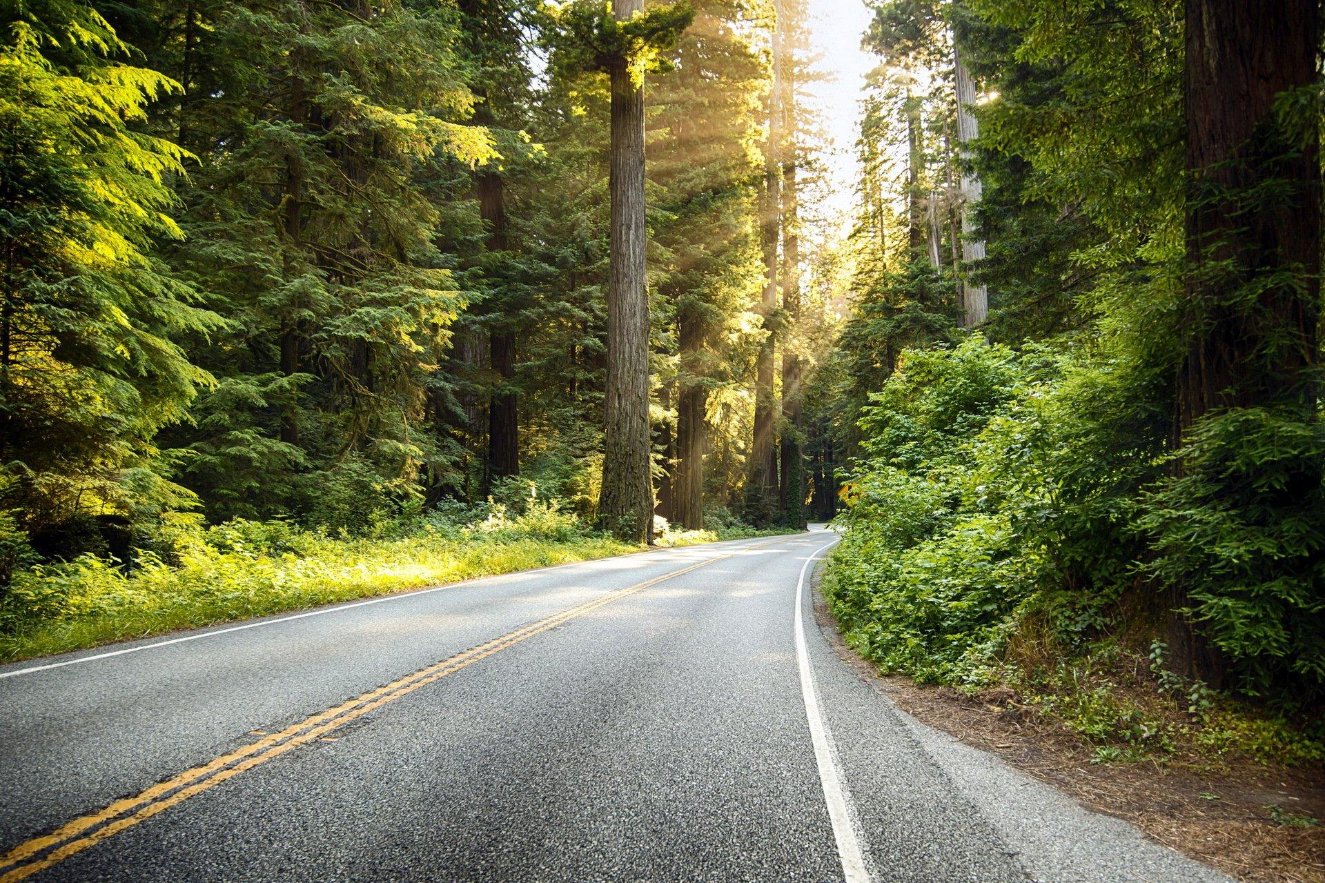 Обои на телефон дорога в лесу
