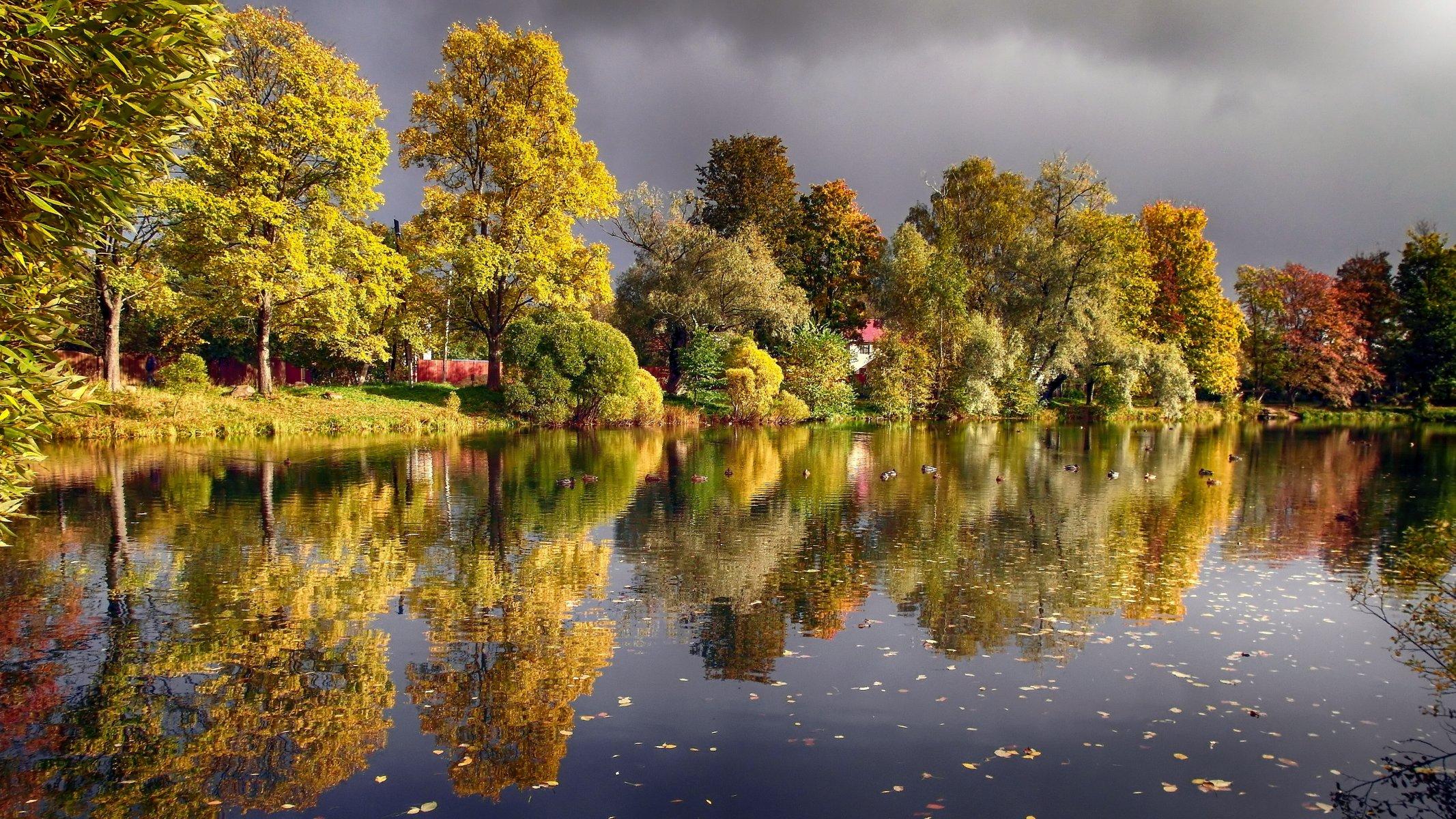 осень на пруду картинки внимание сетку нижней