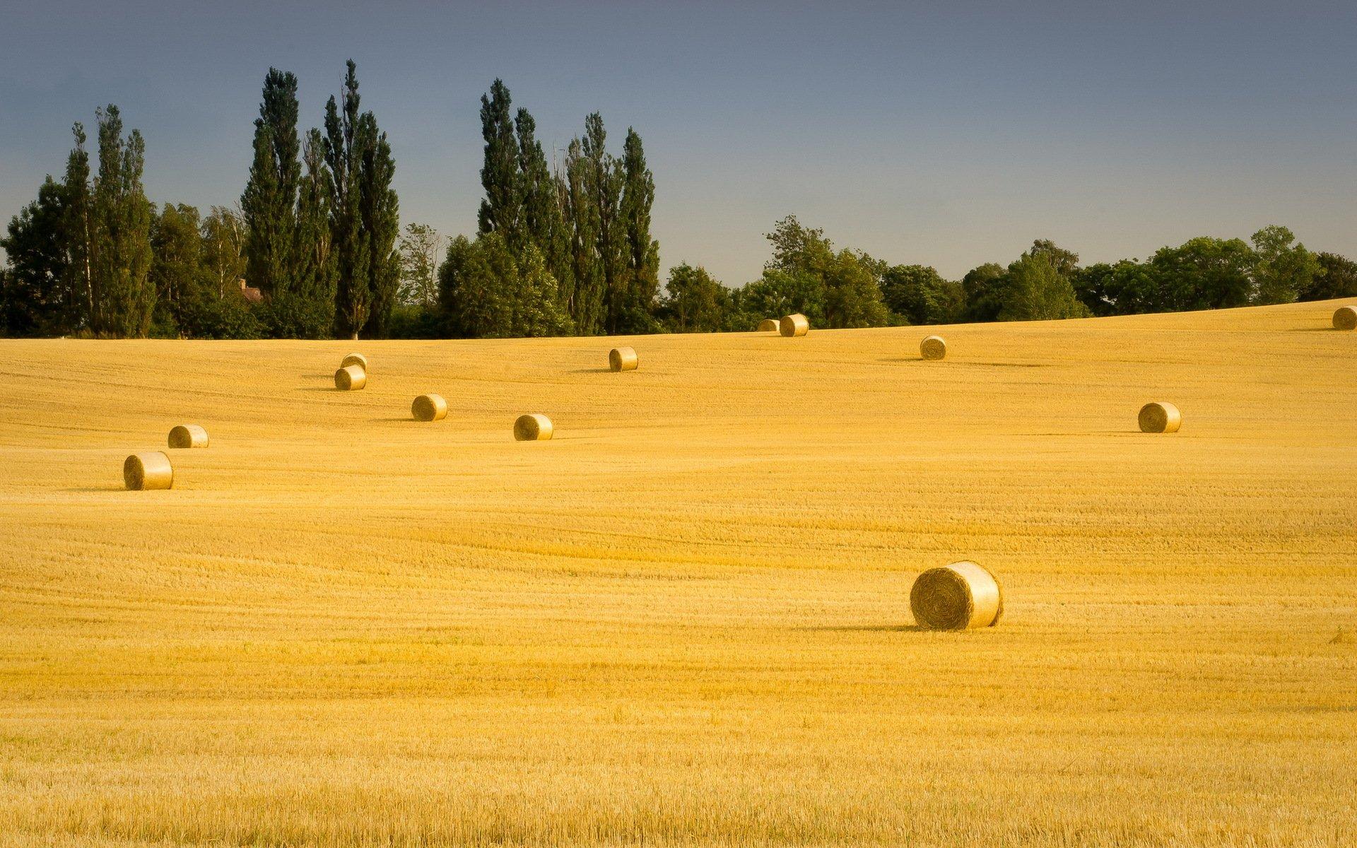 фото камни на сельскохозяйственных полях эстонии запекания