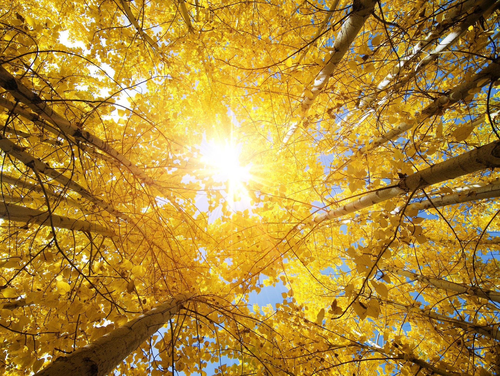 Обои красиво, осень. Природа foto 19
